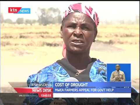 Mwea rice farmers cry out to the Government for aid as drought situation worsens