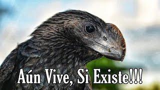 El ave prehistórica que aún vive. (El Garrapatero) 🦖🦕
