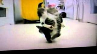 Omg cat walking on two front feet