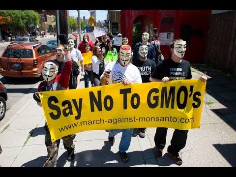 GMOs are Safe...Really?!