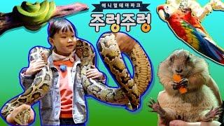거대 뱀 목걸이한 라임! 일산 주렁주렁 애니멀 테마파크 귀여운 동물친구들을 만나다 LimeTube & Toy 라임튜브