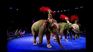 Цирк ИНДИРА Удивительное Шоу со слонами
