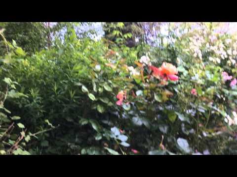 20150621 walking through Hugh and June's secret garden in Blockley UK