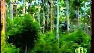 Воробьи Австралии / Grassfinches of Australia