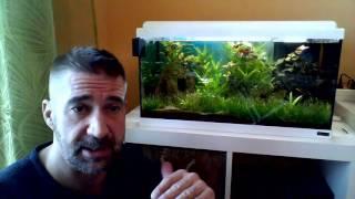 Anfänger Aquarium René ´s Tipps 3