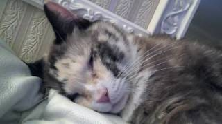 My Cat Snoring...very funny video