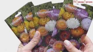 Семена Гелихризума - Помидорчик