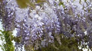 Voice of David 65 - music version - Psalm 65 - muziek bewerking kerkorgel violen orkest mp3