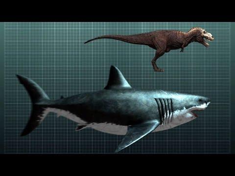 The Nightmarish Megalodon  Sharkzilla  Shark Week 2012