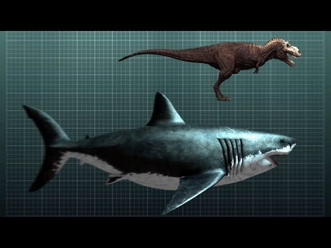 The Nightmarish Megalodon | Sharkzilla -- Shark Week 2012