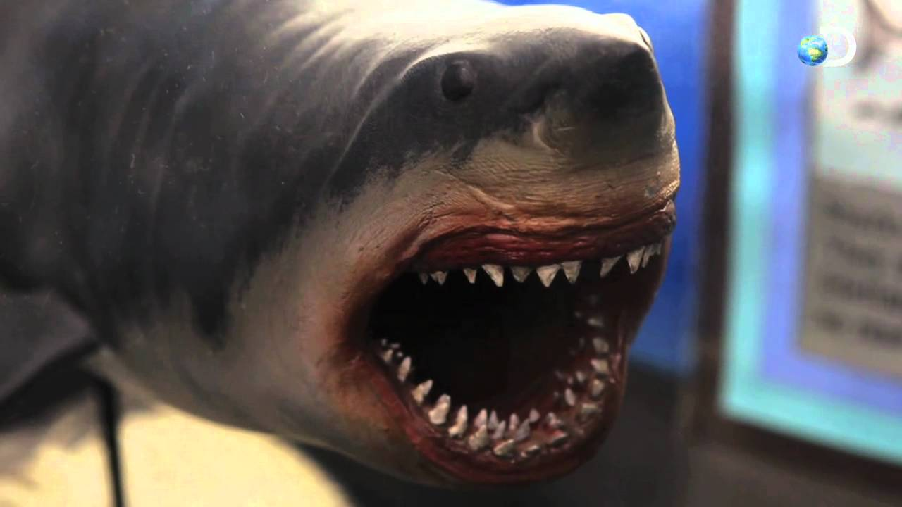 The Nightmarish Megalodon | Sharkzilla -- Shark Week 2012 - YouTube