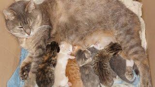 Котята борьба за выживание