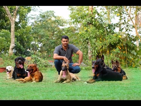 saajan  saji cyriac dog training school  at  pala 09961310970