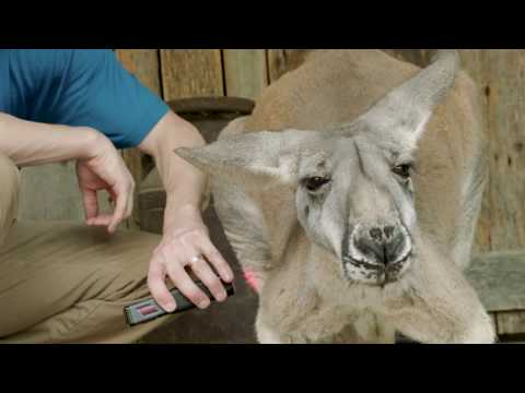 Kangaroo Chiropractor