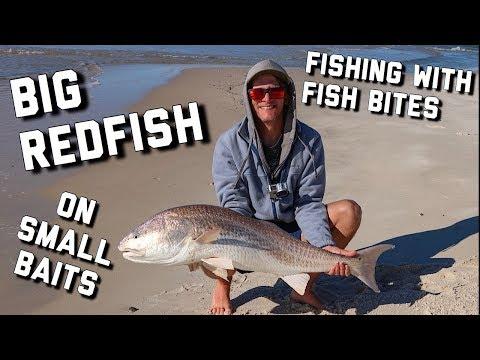Surf Fishing   Catching BIG Bull Redfish On FishBites