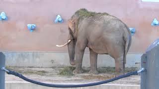 Видео про животных -  Макс идет в Московский зоопарк - Развлечения для детей