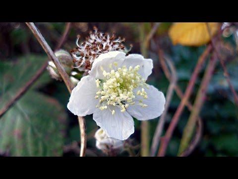 Writing wrongs | Rachel Carson, Silent Spring