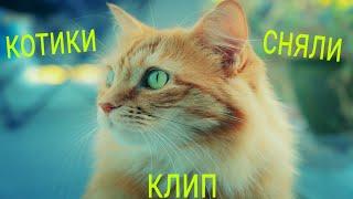 •Клип котиков•