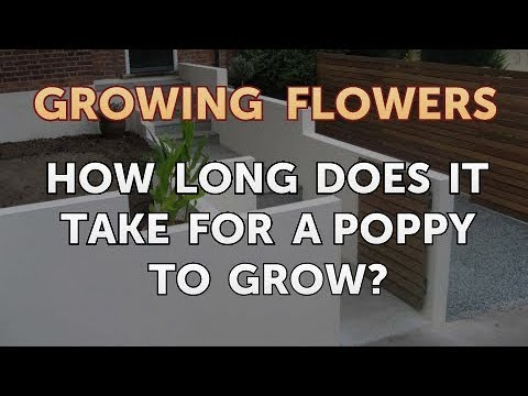 How Long Does