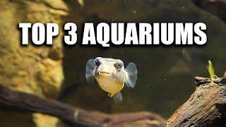 my-top-3-aquariums