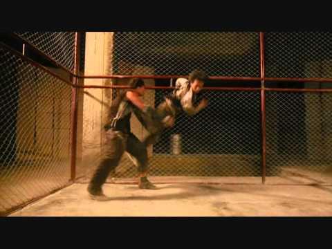 Bangkok Knockout - Видео онлайн
