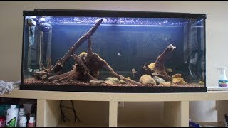 Infamous Secret To Preparing Driftwood For A Aquarium Or Fish Tank Known How To Waterlog