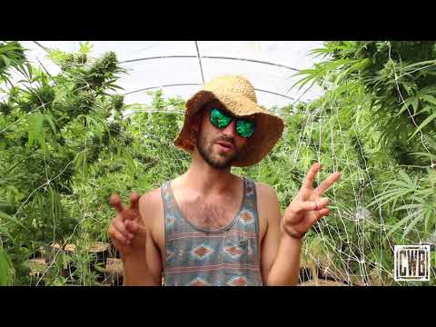 SC Farms on Organic Cannabis Farming
