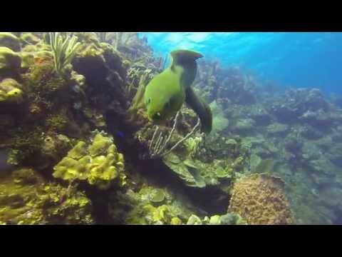 Diving Roatan, Honduras coral reefs