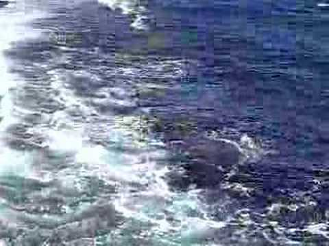 Sharm El Sheikh Reef