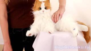 Интерактивная игрушка. Кошка Лулу (89987)