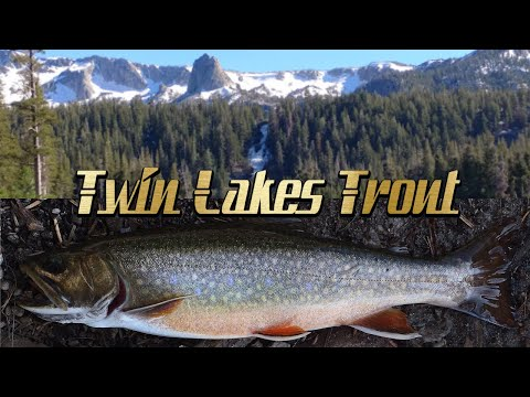 Twin Lakes (Mammoth) Fishing
