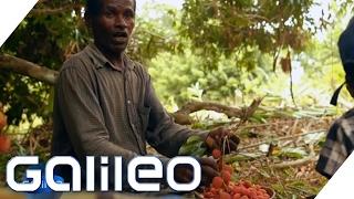 So kommt die Litschi von Madagaskar zu uns in den Supermarkt | Galileo Lunch Break