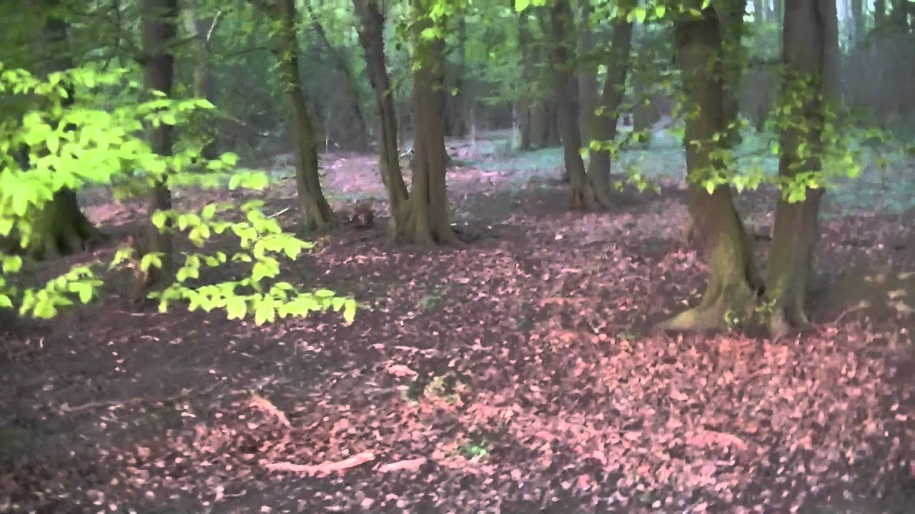 Gruseliger Wald