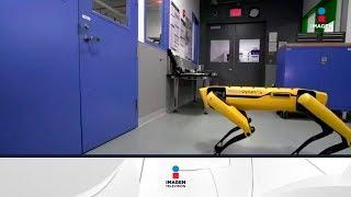El perro-robot de Boston Dynamics aprende a abrir una puerta   Noticias con Francisco Zea
