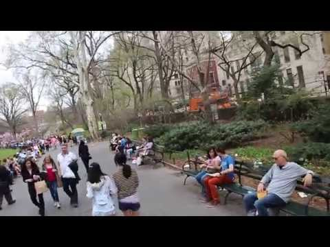 Central Park - walking tour part 1 - tree's blooming