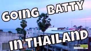 Going Batty in Thailand!