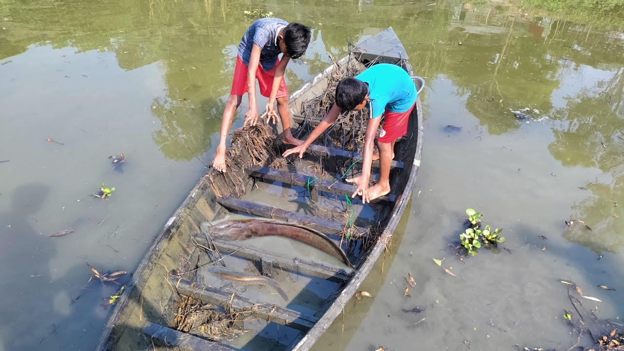 Old Traditional Fishing Technique|প্রাচীন পদ্ধতিতে নৌকা সেচে মাগুর মাছ শিকার|Easy & Natural Fishing