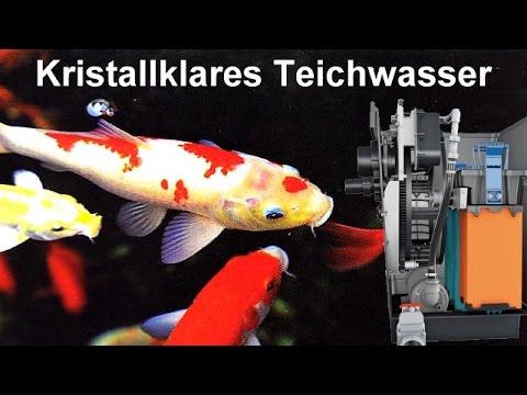 Trommelfilter biotec premium 80000 trommelfiltertechnik for Teichwasser
