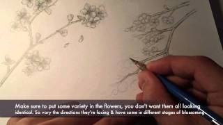 How to draw ~Cherry Blossoms~