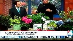 How to Grow Hydrangeas with Jacksonville Landscaper Larry ONeil