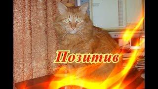 Смешные кошки коты собаки Позитив Создай себе хорошее настроение