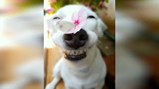 Лучшие приколы с животными 2019 Смешные видео про кошек смешные коты приколы Веселые кошки 49