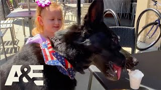 How to Stop Your Cute Dog From Begging  | America's Top Dog (Season 1) | A&E
