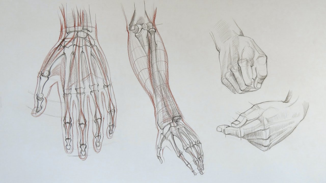 Drawing Hands - Anatomy Master Class - YouTube