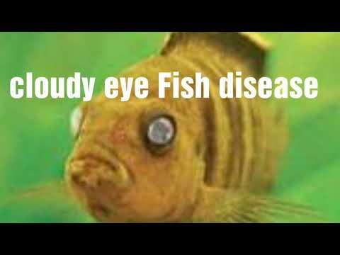 Cloudy Eyes Fish Disease Ki Jankari Hindi Mein