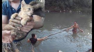 Спасение котёнка Горячий Ключ. 3 дня под завалом. Спасённый Котёнок в добрых руках