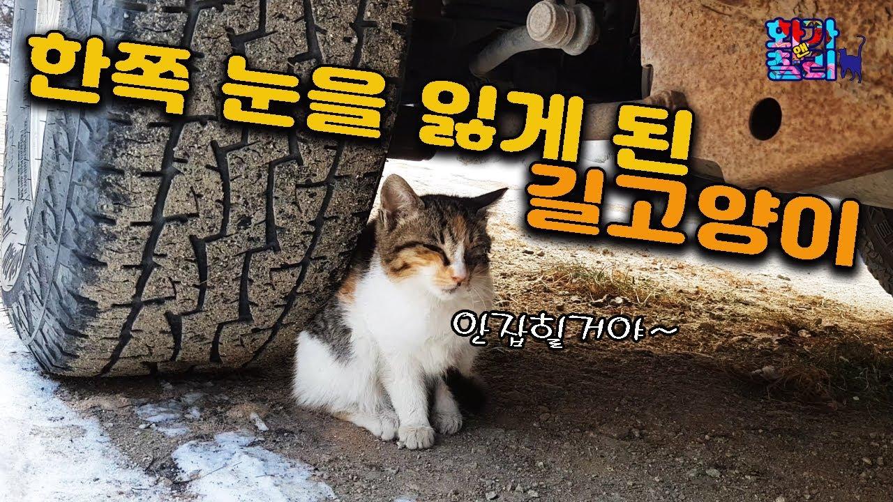 한쪽 눈을 잃게된 아기 길고양이 /A street cat that has lost one eye