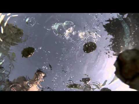GoPro: Underwater slow motion test