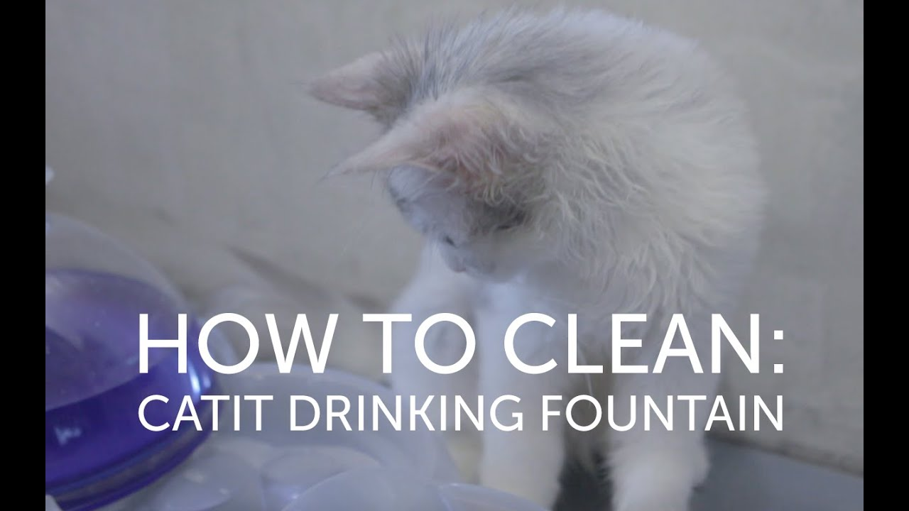 how to clean catit water fountain