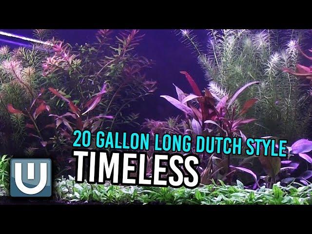Timeless | 20 gallon Dutch Style Aquarium